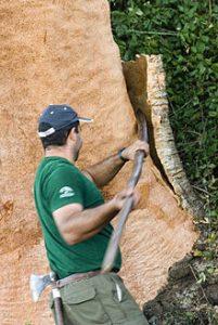 écorçage chêne liège