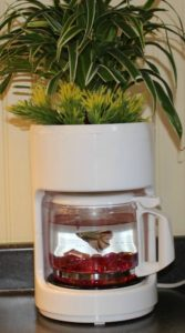 Detourner-recycler-les-objets-cafetiere-aquarium