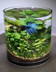 Detourner-recycler-les-objets-saladier-verre-aquarium