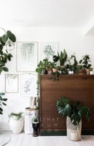 Deco-bois-verdure-jungle
